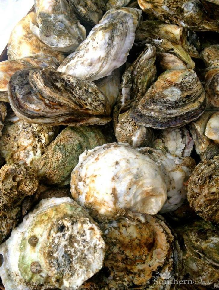 Inaugural Oyster Roast with Live Music from If Birds Could Fly