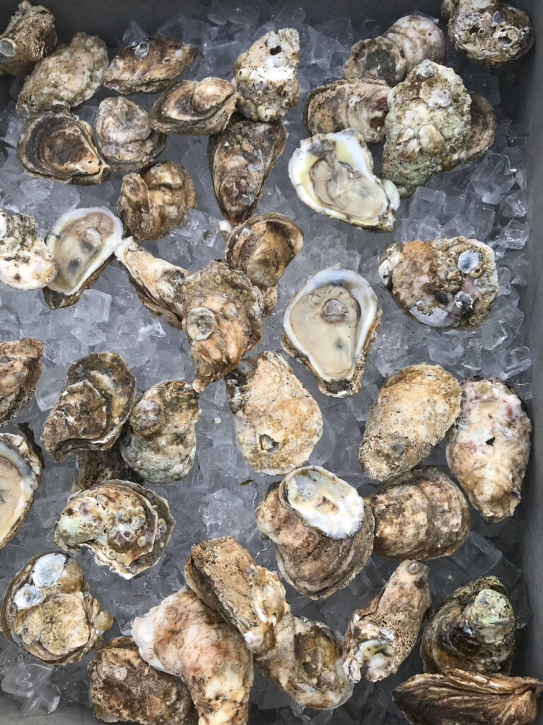 Oyster Roast and Live Music with Virginia Ground